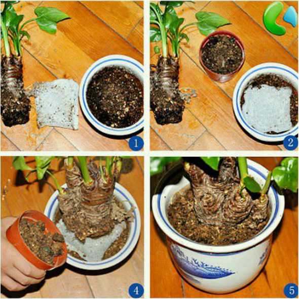 #9. Use Diapers and coffee filter to Retain Moisture in Potted Plants - 12 DIY Garden Hacks to Take Your Backyard to the Next Level